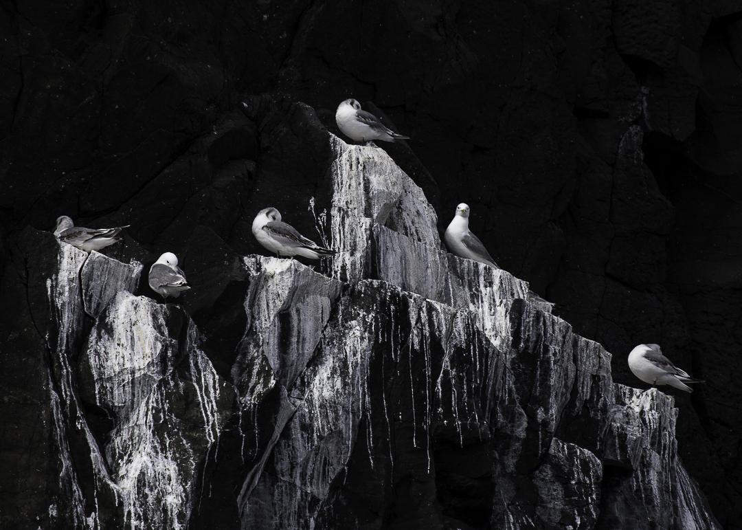 Selkie birdlife